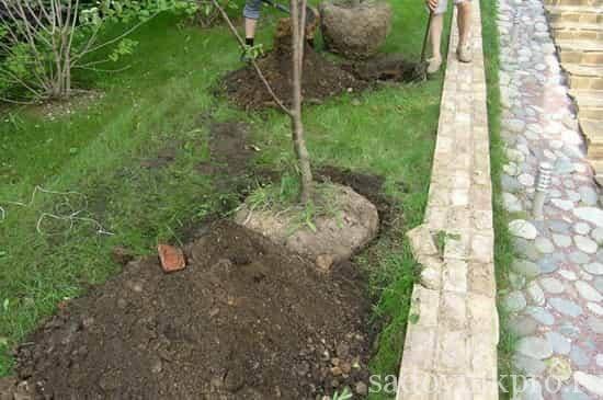 Какие удобрения вносить под плодовые деревья и кустарники 72